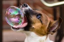Et là? La bulle éclate?